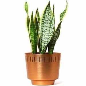 MODN LOVR Mid Century Modern Planter Pot